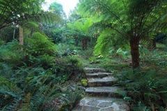 花岗岩道路穿过冈瓦纳雨林 库存图片