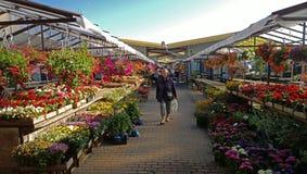 花市场在拉脱维亚 免版税库存图片
