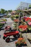 花市场苗圃植物 免版税库存图片