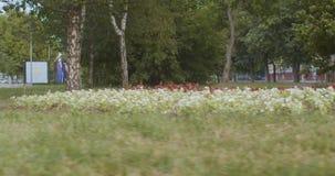 花床在公园 股票视频
