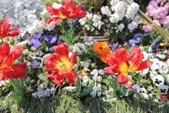 花床在山下公园 免版税库存照片