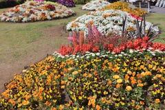 花床在山下公园 库存照片