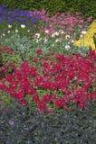 花床在开花的庭院里 库存照片