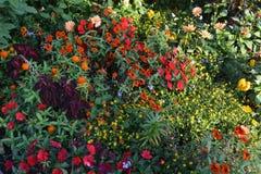 花床在日落的秋天 免版税库存照片
