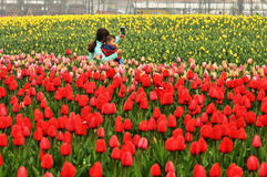 花床在植物园里 库存图片