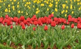 花床在植物园里 库存照片