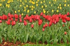 花床在植物园里 免版税库存图片