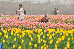 花床在植物园里 免版税库存照片