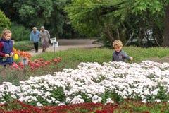 花床的人们在一个公园 免版税库存图片