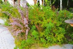 花床,围拢由庭院和胡同 库存照片