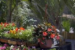 花店工作台面的几棵被暴露的植物 免版税库存图片