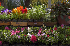 花店工作台面的几棵被暴露的植物 免版税图库摄影