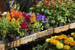 花店工作台面的几棵被暴露的植物 免版税库存照片