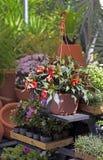 花店工作台面的几棵被暴露的植物 图库摄影