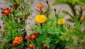 花庭院在街道的 库存照片