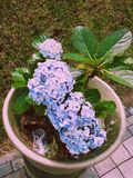 花开花兰花兰花兰花植物 库存照片