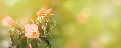 花开花关闭  开花的结构树 自然花卉全景背景 复制空间 库存照片