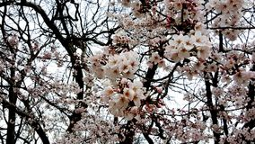 花开花在春天 免版税库存图片