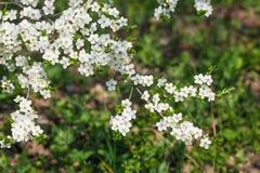 花开花的树特写镜头 免版税库存照片