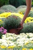 花开花质量罐采取 免版税库存照片