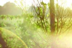 花弄脏了背景 Bokeh,与阳光的Boke野花上色Absract背景,五颜六色的自然,绿色迷离背景 图库摄影