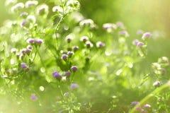 花弄脏了背景 Bokeh,与阳光的Boke野花 库存图片