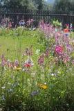 花彩虹在庭院里 免版税库存图片