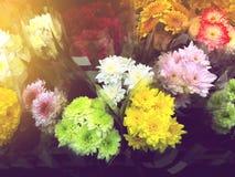 花待售在花市场曼谷泰国上 库存图片