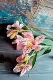 花德国锥脚形酒杯桃红色开花与在木背景的被察觉的瓣与非常有趣的纹理 免版税库存图片