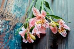 花德国锥脚形酒杯桃红色开花与在木背景的被察觉的瓣与非常有趣的纹理 库存图片