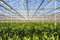 花托儿所的温室  图库摄影