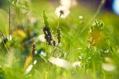 花抽象风景在草甸 库存图片