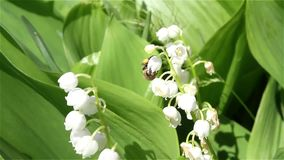 花授粉的过程 影视素材