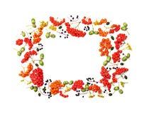 从花揪、在白色背景顶上的视图和各种各样的果子的秋天框架隔绝的橡子、花 平位置称呼 免版税库存图片