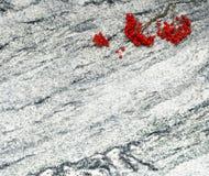 花揪分支与束在White gr贵族的成熟莓果 免版税库存图片