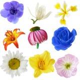 花收集 库存照片