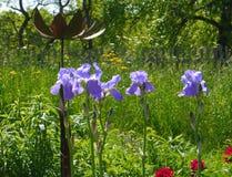 花时间庭院春天夏天 库存照片
