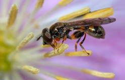 花昆虫紫色 库存图片