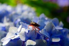 花昆虫 免版税库存照片