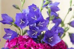 花明亮的花束-蓝色响铃和小康乃馨开花 免版税库存图片