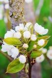 花春天背景在树的 免版税图库摄影