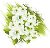 花春天 图库摄影