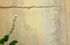 花有水泥墙壁背景 库存图片