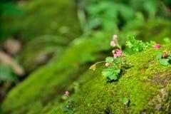 花本质上在自然背景的 库存图片