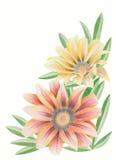 花杂色菊属植物 库存图片