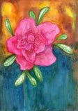 花杜娟花 在五颜六色的backgro的水彩桃红色花 库存照片