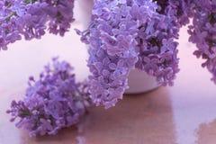 花束丁香在一个白色陶瓷花瓶的在多雨天气在春天庭院里 开花的紫色淡紫色分支 免版税库存照片