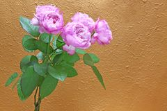 花束上升了 图库摄影