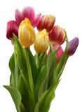 花束五颜六色的复活节开花愉快的郁金香 免版税库存图片