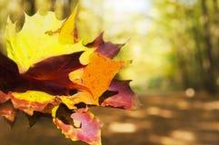 花束五颜六色的秋叶 图库摄影